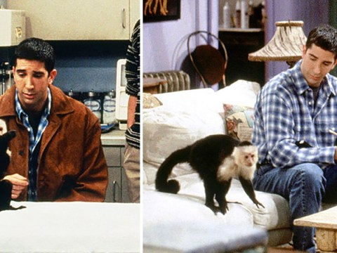 Friends' Marcel the monkey is making a TV comeback after 23 years away