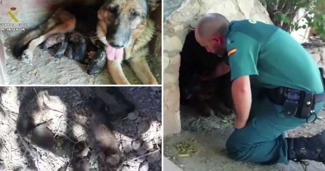 The puppies were found in the Bajo Aragon region of north eastern Spain