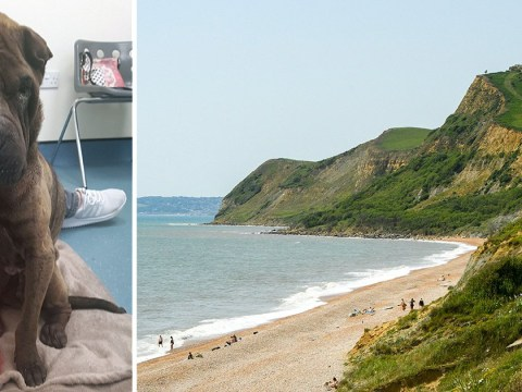 Pet dog survives 45 days living off seaweed after fall from 550ft cliff