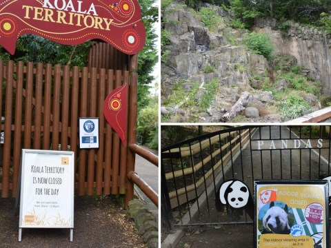 Visitor's disappointment at 'lack of animals' at Edinburgh Zoo