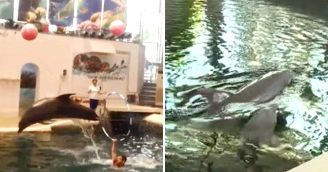 Baby dolphin dies half way through performance at water park