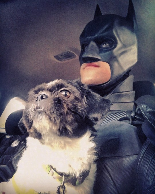 Batman with a dog he rescued