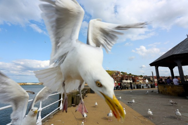 The café at Cardiff Central station said refunds were not possible as 'the seagulls don't work for us' (Picture: SWNS.com)