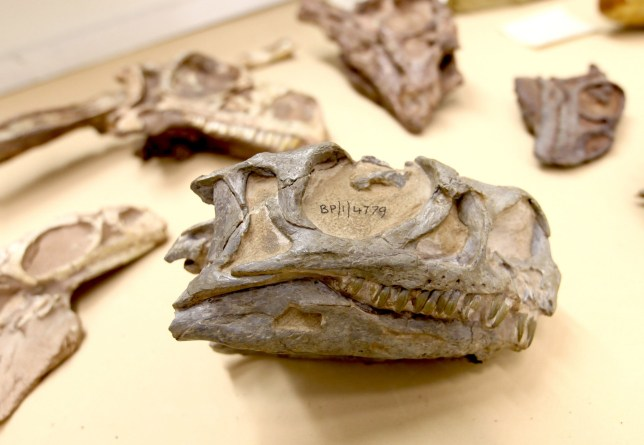 New species of dinosaur discovered 'hiding in plain sight'