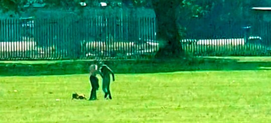 Video grab from the shocking footage of a man kicking a dog in Inchyra Park, Grangemouth, Falkirk, after appearing to tease the dog with a ball. See SWNS story SWSCkick. Shocking footage shows a yob kicking a dog in the ribs in an unprovoked attack in a park. The video, released by the Scottish SPCA in a bid to track down the culprit, was covertly filmed by a member of the public who was concerned about the Staffie?s welfare. In the footage filmed in Inchyra Park, Grangemouth, Falkirk, two young men can be seen with a tan-coloured Staffie. The men, thought to be in their late teens or early 20s, appear to be teasing the dog with a ball.