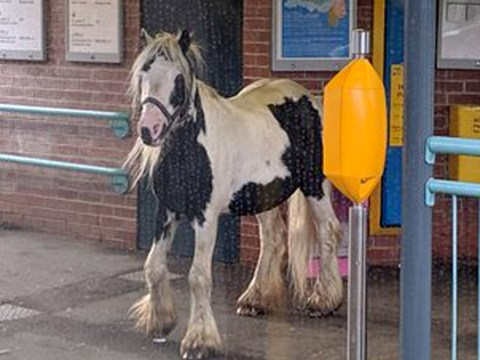Horse waits for train on South Shields metro platform