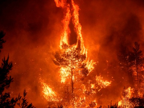 State of emergency declared as 56 wildfires break out across Greece