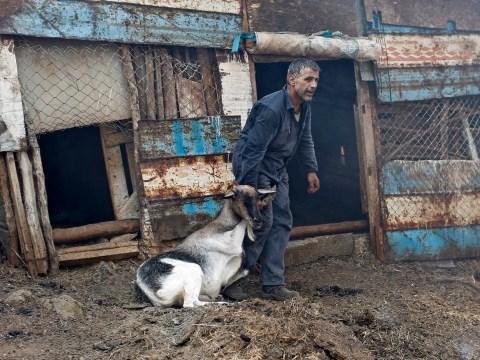 Desperate bid to save animals as wildfire ravages Greek Island