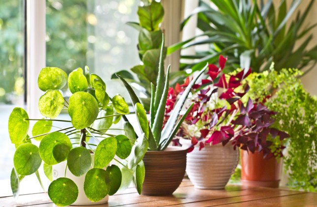 Various green house plants beside the window