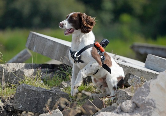 Mac the dog wears boots and goggles for his important job in