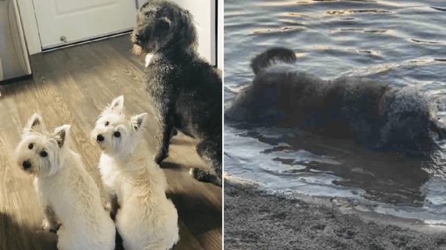Dogs killed by blue-green algae