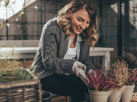 How to prepare your plants for cold weather