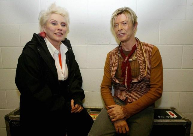 Bowie penis