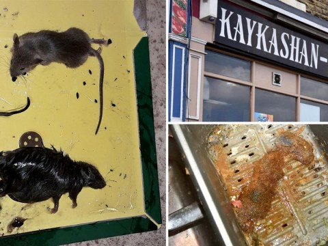 Dead rat and mouse pictured on floor of Indian takeaway 'surrounded by droppings'
