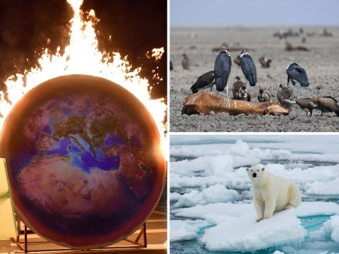 Earth has crossed nine climate 'tipping points' and scientists fear the apocalypse is nigh