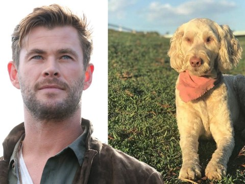 Chris Hemsworth reunites with his beloved dog after she goes missing