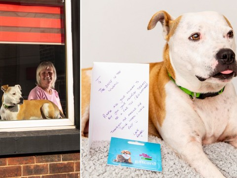 Dog who always sits in the window given sweet letter by kind stranger