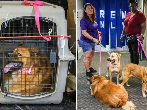 Dozens of dogs rescued from Bahamas after owners never returned