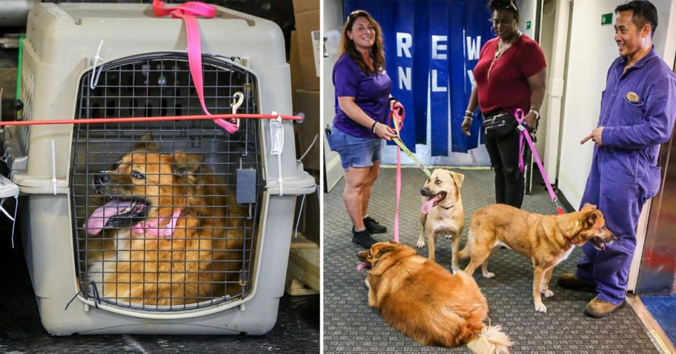 Dogs being rescued by the Big Dog Ranch Rescue in Florida aboard the Bahamas Relief Cruise