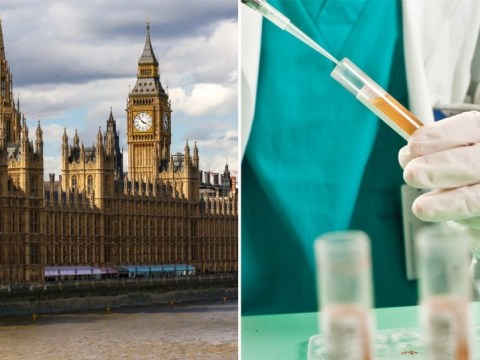 Petition launched to drug test all MPs