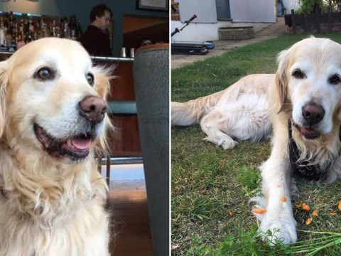 Dog goes vegetarian and refuses meat after eating pieces of a BBQ