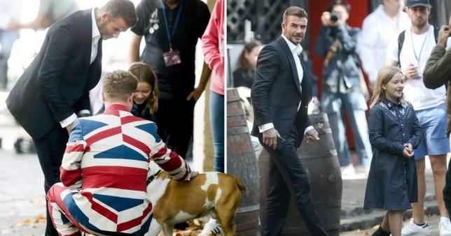 David Beckham and daughter Harper stroking a dog