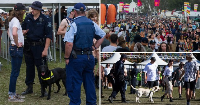 Police to be grilled over strip-search of underage girl at music festival