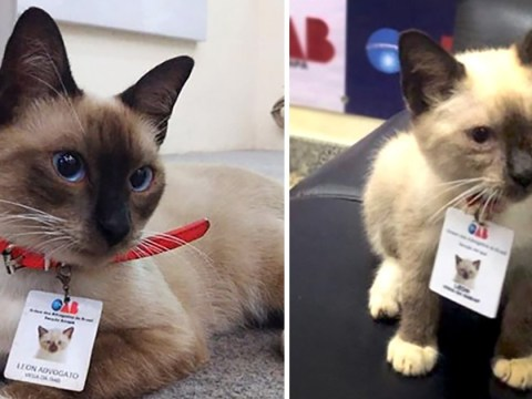 Homeless cat lands a job at a law firm after people complained about him hanging around