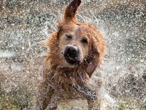 What to do with your pets if you're flooded in Hurricane Lorenzo