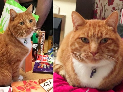Family sent video of their missing cat with head cut off