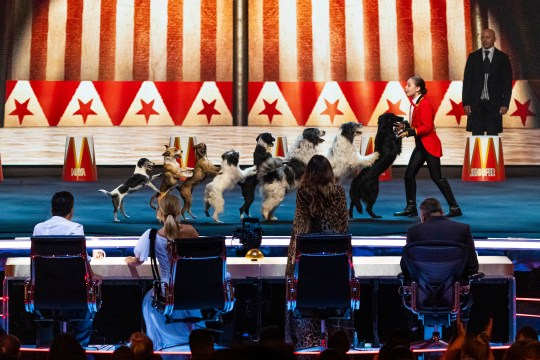 Alexa Lauenburger and her dogs on Britain's Got Talent