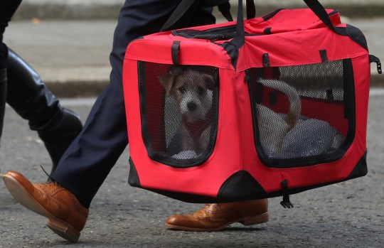Members of a charity organisation Friends of animals Wales bring a new dog to Downing Street in London, Britain, September 2, 2019. REUTERS/Simon Dawson