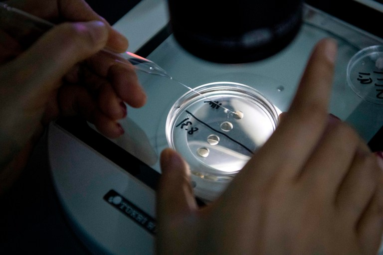 a laboratory technician checking samples with a microscope at the Chinese company Sinogene, a pet cloning outfit which has cloned more than 40 pet dogs since 2017, in Beijing.