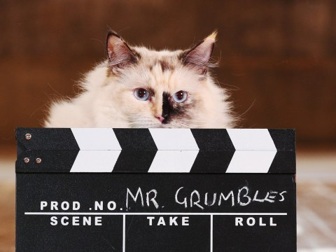 Asda are auditioning cute cats for their 2019 Christmas advert