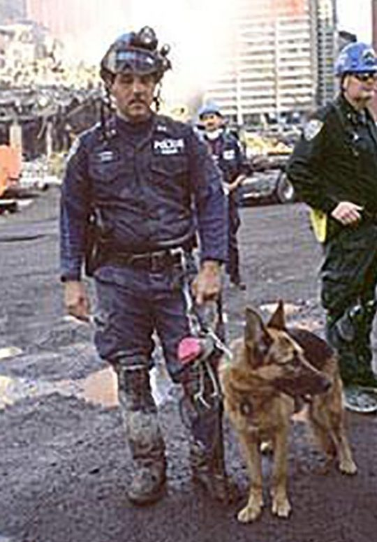 Hero dogs of 9/11 - APPOLLO