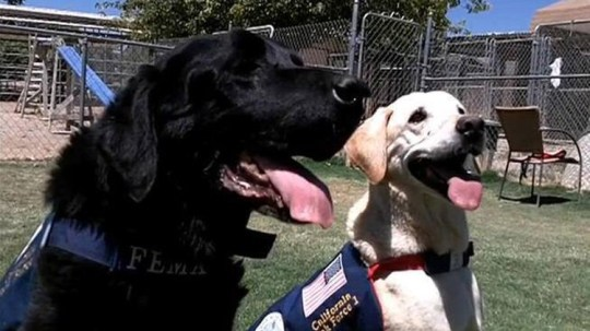 Hero dogs of 9/11 - COBY & GUINNESS
