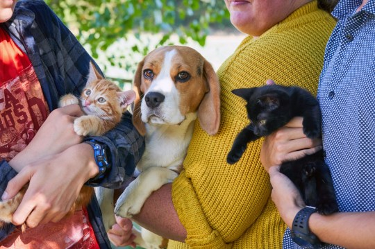 Beagle is surrogate mum to two kittens and even breastfeeds them