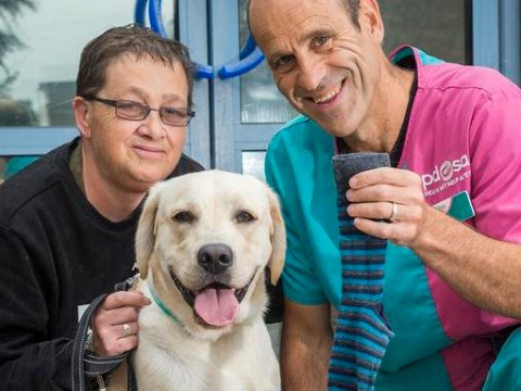 Labrador needed life-saving surgery after swallowing owner's sock