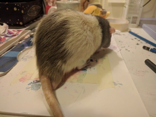 Darius the rat painting with his feet