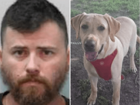 """Pet owner 'arranged for dog to have sex with woman for its """"birthday present""""'"""