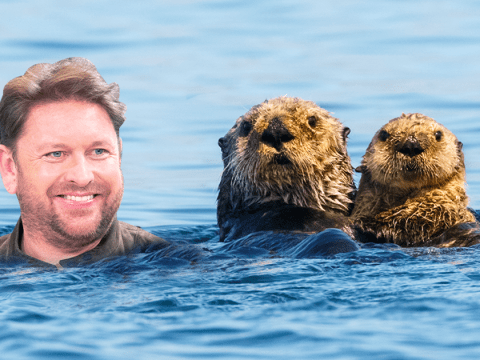 James Martin gets roasted by the gay community for 'identifying as an otter'