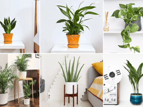 The best houseplants for your bedroom to help you sleep