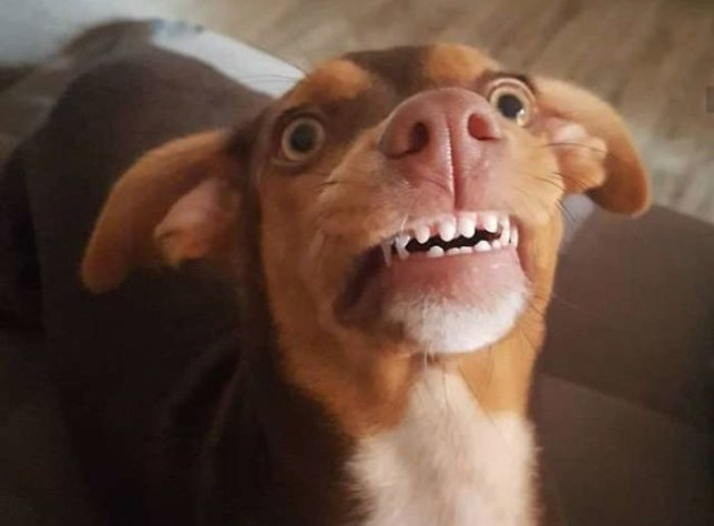 Grandma loses her false teeth, finds out the dog's been