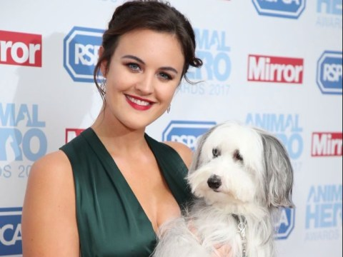 Britain's Got Talent winner Ashleigh Butler reveals Pudsey's replacement Sully is bisexual: 'He's attracted to anything fluffy'