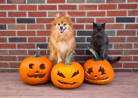 Can cats, dogs and other pets eat pumpkin seeds?