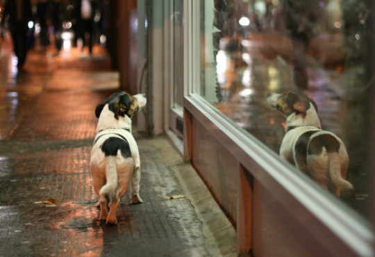 dog on a night time winter walk