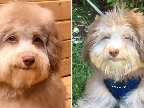 Adorable dog's face looks very human and people can't get enough