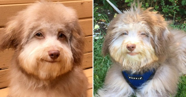 Dog has a face that looks human