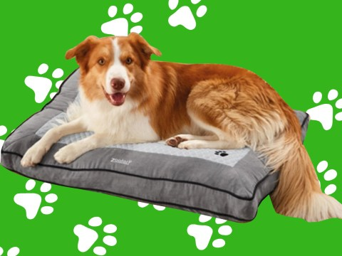 Lidl is selling a heated dog bed which keeps four-legged friends warm during winter