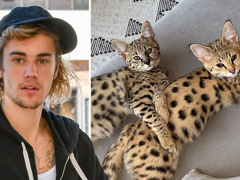 Justin Bieber tells Peta to 'suck it' after they criticise him over exotic pet cats